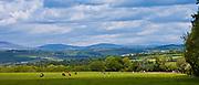 Distant view of Knockmealdown Mountains at Glengoura, County Cork, Ireland