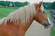 Palmetto Horse Farm