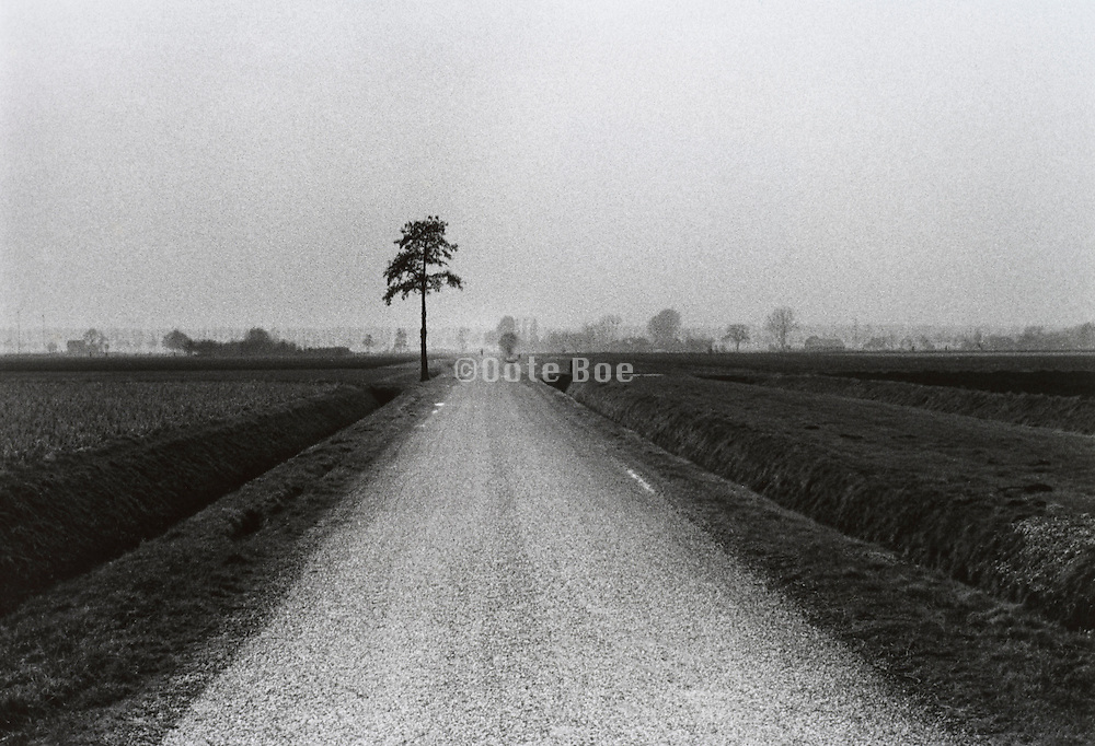 Dutch rural farming landscape with little road crossing through it