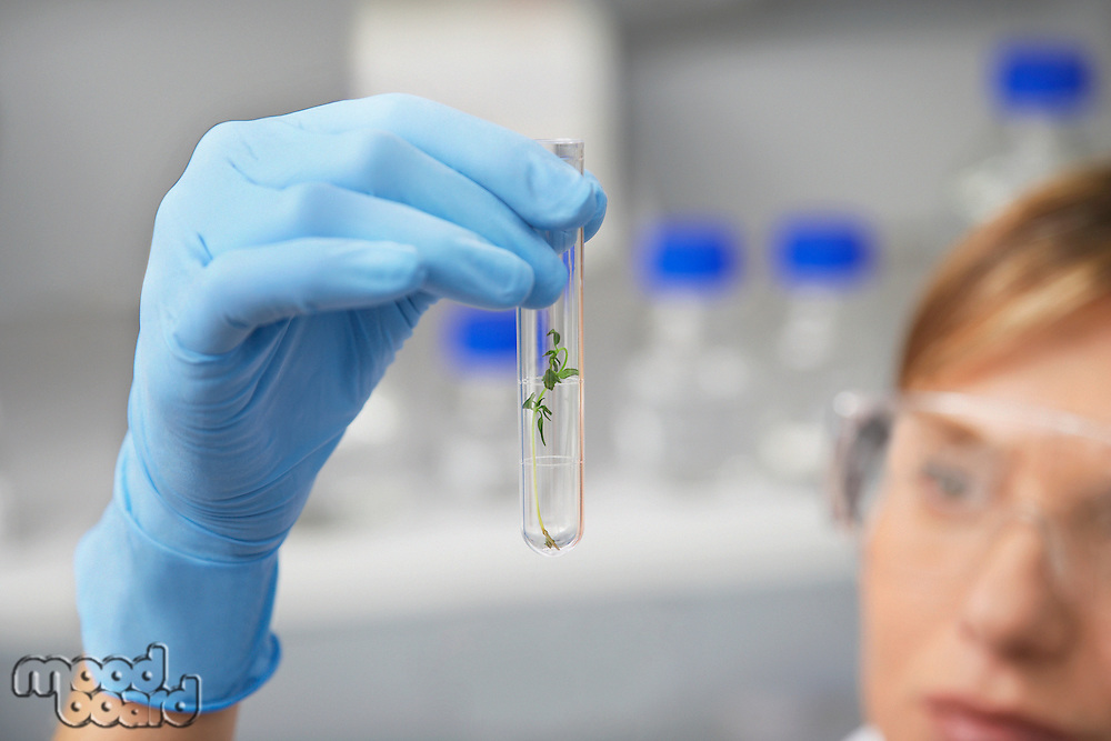 Scientist examining plant in test tube in laboratory focus on hand and test tube