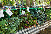 Fresh organic kale and greens on sale at a farmers market in Wicker Park August 2, 2015 in Chicago, Illinois, USA.