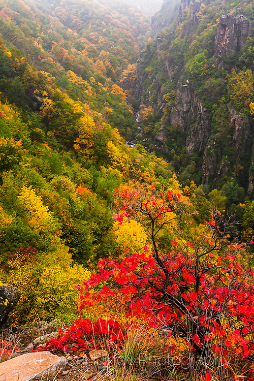 Colorful autumn forests in Rhodope Mountains