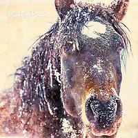 My Montana - Portfolio