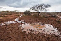 Rain from a thunderstorm forms rivulets that quenches the parched earth of a dry waterhole, Rooipoort Nature Reserve, Northern Cape, South Africa
