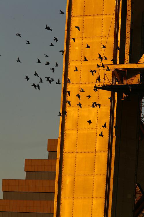 Birds make a flight around the Tower Bridge during a sunset 09/27/07.