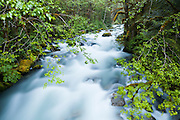 Lush forest lines North Fork Cascade River, Mount Baker-Snoqualmie National Forest, Washington.