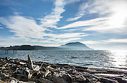 Clouds streak across blue sky over a driftwood beach near Village Point on Legoe Bay, Lummi Island, in the Salish Sea, Whatcom County, Washington, USA.