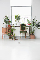 House interior with chair and potted plants by window