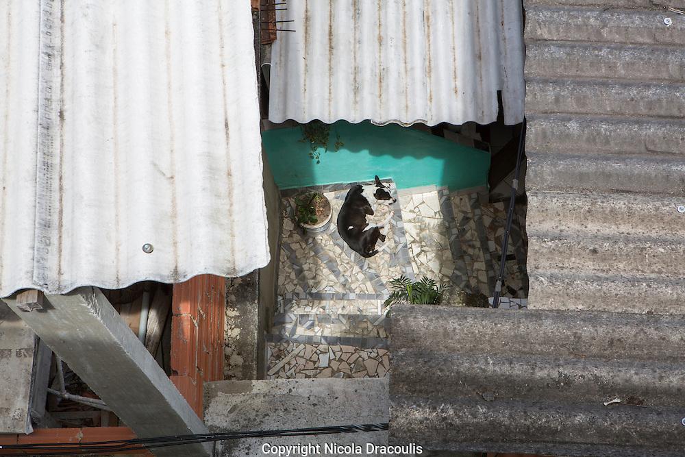 Dog sleeping in the sun in Babilonia, Rio de Janeiro