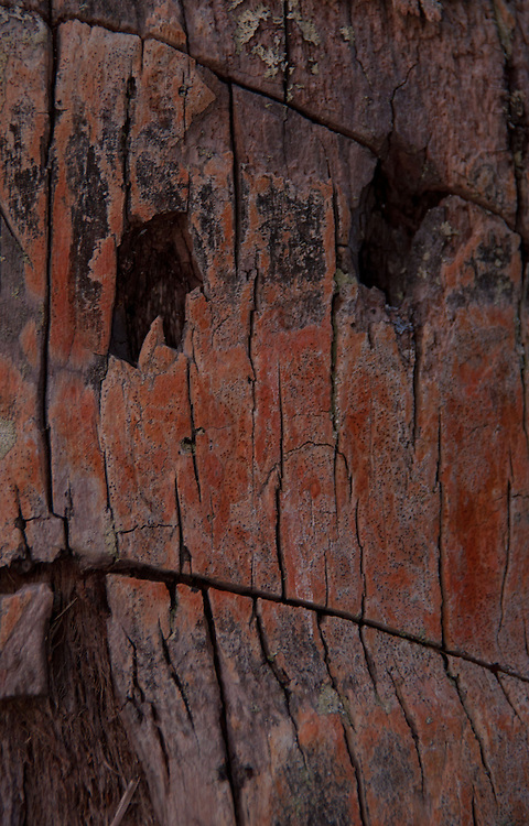 Bark Detail, Coconut Palm, Turtle Island, Yasawa Islands, Fiji