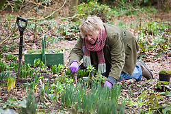 Carol Klein planting corydalis and primroses in the woodland garden