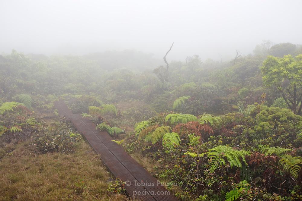 Low cloud blankets the Alakai Swamp Trail, in Kokee State Park, Kauai, Hawaii.