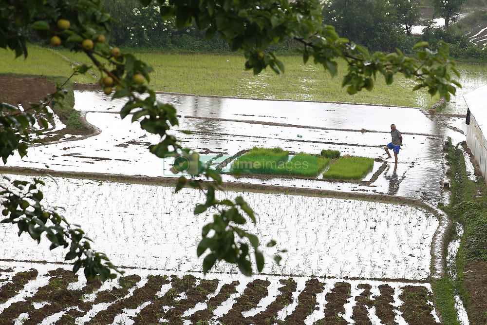 June 16, 2017 - Lalitpur, Nepal - A Nepalese man planting rice in a paddy field as it rains in Lalitpur, Nepal on June 16, 2017. (Credit Image: © Skanda Gautam via ZUMA Wire)