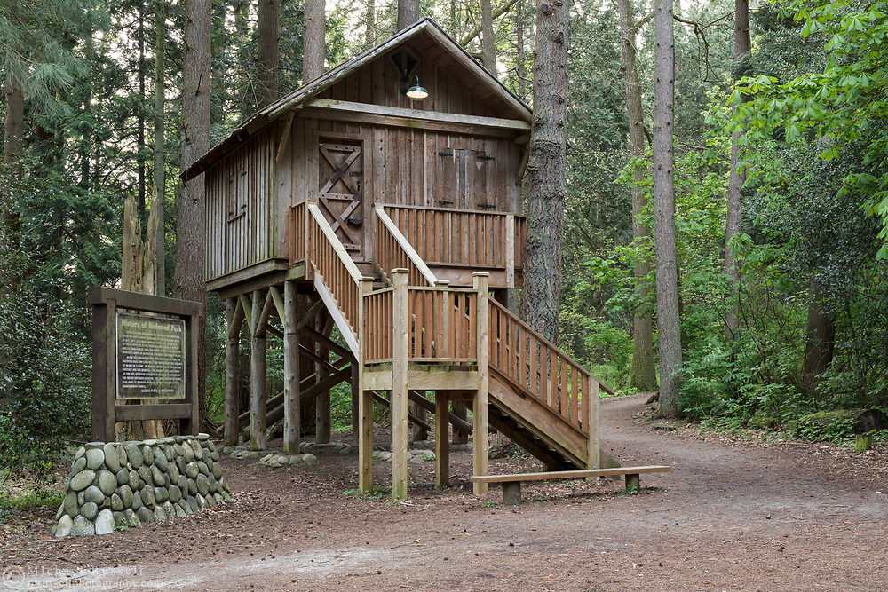 The treehouse at Redwood Park in Surrey, British Columbia, Canada.  The original treehouse was built by Peter and David Brown in 1878.