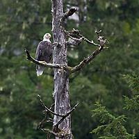Walker Cove Eagles