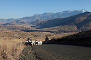 15 July 2011. On the road near White Hill, Qacha's Nek, Lesotho. Local herders take their flock of angora goats to different pastures.
