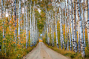 Aspen Alley in Southern Wyoming, south of Rawlins, WY.