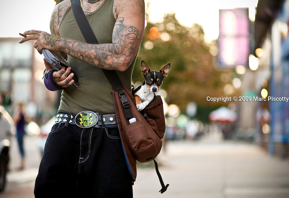 "SHOT 8/28/09 7:21:25 PM - Denver tattoo artist ""Zeb One"" with Zeus, his 10 month-old Teacup Chihuahua as he was out promoting his tattoo work on Colfax Avenue near the Bluebird Theater. Colfax Avenue is the main street that runs east and west through the Denver-Aurora metropolitan area in Colorado. As U.S. Highway 40, it was one of two principal highways serving Denver before the Interstate Highway System was constructed. In the local street system, it lies 15 blocks north of the zero point (Ellsworth Avenue, one block south of 1st Avenue). For that reason it would normally be known as ""15th Avenue"" but the street was named for the 19th-century politician Schuyler Colfax. On the east it passes through the city of Aurora, then Denver, and on the west, through Lakewood and the southern part of Golden. Colloquially, the arterial is referred to simply as ""Colfax"", a name that has become associated with prostitution, crime, and a dense concentration of liquor stores and inexpensive bars. Playboy magazine once called Colfax ""the longest, wickedest street in America."" However, such activities are actually isolated to short stretches of the 26-mile (42 km) length of the street. Periodically, Colfax undergoes redevelopment by the municipalities along its course that bring in new housing, trendy businesses and restaurants. Some say that these new developments detract from the character of Colfax, while others worry that they cause gentrification and bring increased traffic to the area. (Photo by Marc Piscotty / © 2009)"