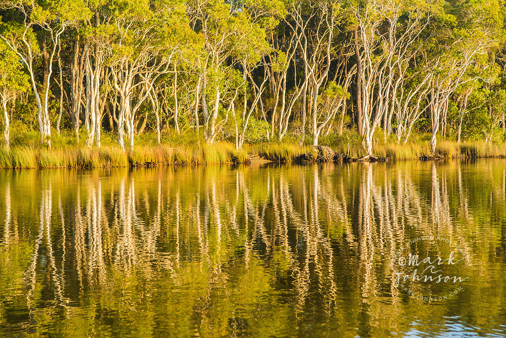 Paperbark trees reflected in the Noosa River, Cooloola National Park, Queensland, Australia
