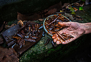 Avdiivka, eastern Ukraine, Nov. 2017 <br />