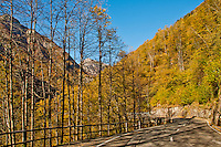 Golden yellow autumn mountain road in Valle Onsernone, Ticino, Switzerland Ticino, Southern Switzerland.