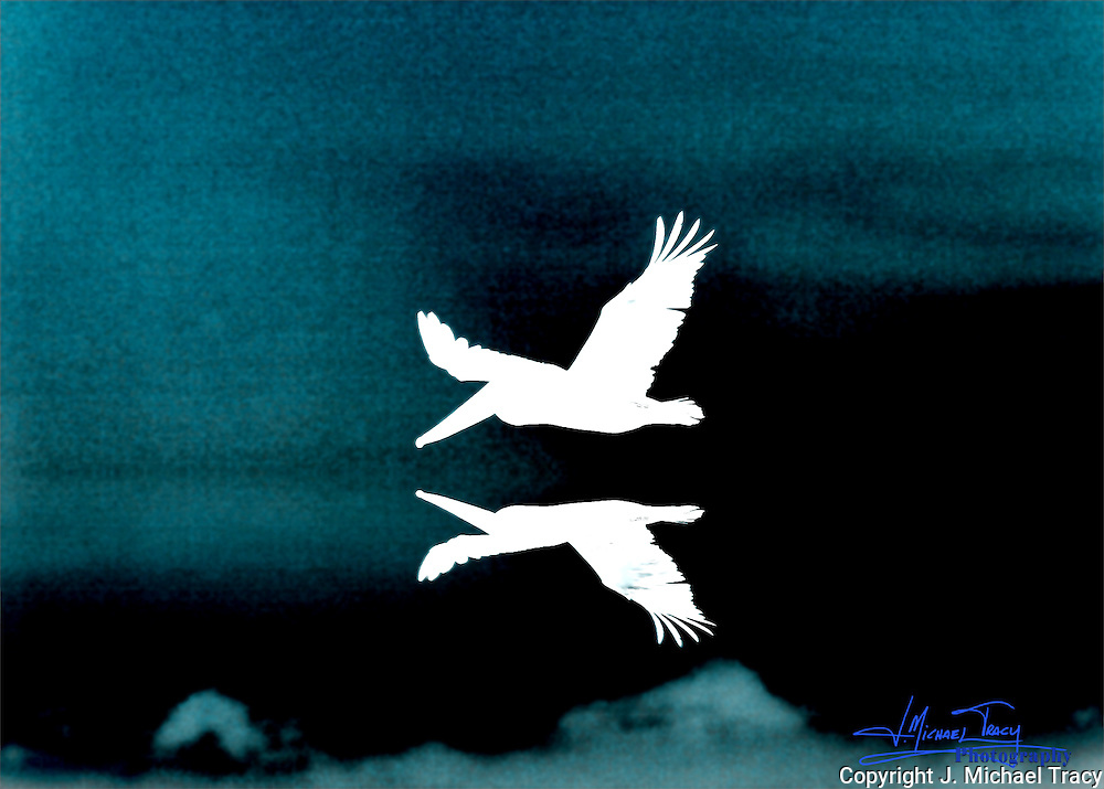 A pelican flying close to the water, reflecting it's image and inverted. Photo Art.