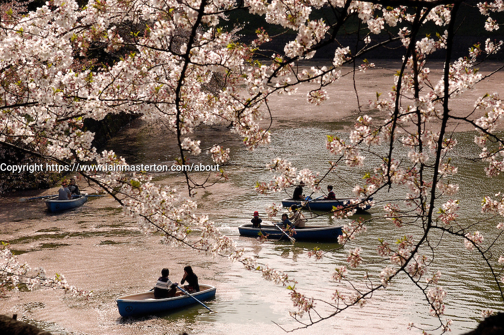 Rowing boats on Imperial Palace moat during cherry blossom season in Tokyo Japan