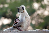 Wildlife - Primates