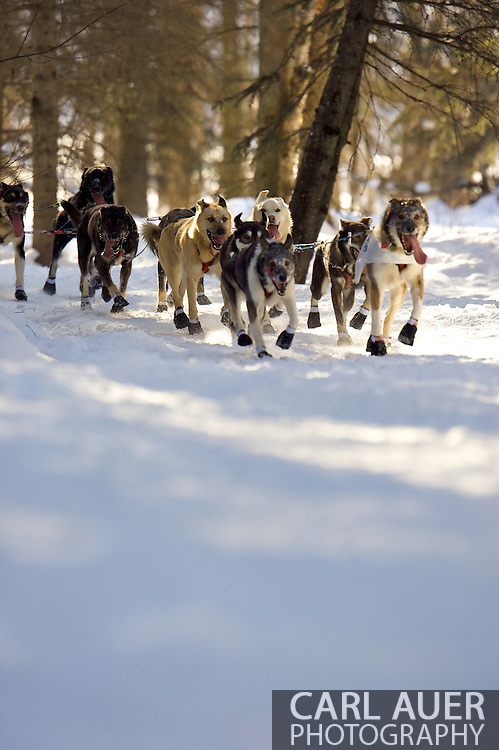 March 7th, 2009:  Anchorage, Alaska - The dog team of Sven Haltmann of Willow, Alaska during the start of the 2009 Iditarod.