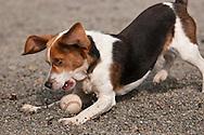 Hubert playing with tennis ball