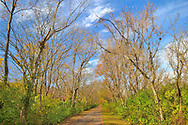 Ohio Bike Trail