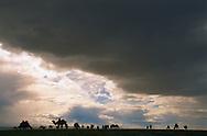 Mongolei, MNG, 2003: Kamel (Camelus bactrianus). Eine Herde in den Weiten der südlichen Gobi, dunkle Regenwolken am Himmel, regnerischer Sommer, sehr selten in dieser Region. | Mongolia, MNG, 2003: Camel, Camelus bactrianus, herd in the wideness of the South Gobi, dark and heavy rainclouds in the sky, rainy summer, very rare for this region, South Gobi. |