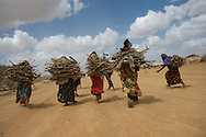 Women and girls walk after collecting firewood at the Ifo refugee camp in Dadaab, Kenya, August 19, 2011. The Ifo settlement is the oldest of the camps in Dadaab, dating back to the early 1990's, but it has swelled in recent months due to Somalis fleeing the drought and famine in their war-torn country.
