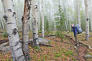 David Coffey hikes the Hankins Pass Trail through aspen forest on a misty morning in the Lost Creek Wilderness, Colorado.