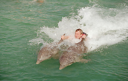 Tourist being pulled along in the water by two dolphins; in sea enclosure near to Guardalavaca; Cuba,