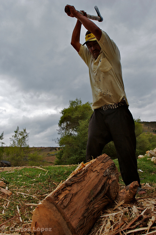 A FARMER IS CUTTING  WOOD TO MAKE FIREWOOD.