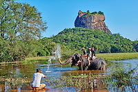 Sri Lanka, province du centre-nord, district de Polonnaruwa, Sigiriya, Ville ancienne et forteresse de Sigiriya classée patrimoine mondial de l'UNESCO, touristes à dos d'éléphant devant le rocher de Sigiriya // Sri Lanka, Ceylon, North Central Province, Sigiriya Lion Rock fortress, UNESCO world heritage site, tourists on an elephant