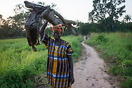 A woman carries wood collected from the forest to her village for cooking and construction. Climate change and human activities have damaged the unique ecosystem of the region with detrimental effects on traditional livelihoods and way of life. Birban, Guinea Bissau. 13/11/2014.