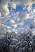 Clouds over bare trees