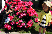 taking a photo of a little child with flowers in the background