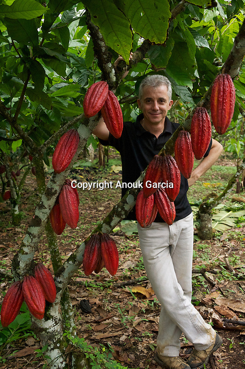 Le pied d'un cacaoyer hybride peut porter jusqu'a? 40 fruits/The foot of a hybrid cacao-tree can carry to 40 fruits.