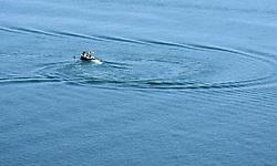 Water Skier, Lake Powell, Utah - Arizona, USA