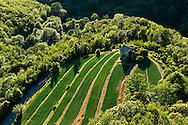 France, Languedoc Roussillon, Gard, Cevennes,région Sumène, culture d'oignons doux des Cévennes, vue aérienne