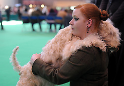 © Licensed to London News Pictures. 11/03/2012. Derfel the soft haired Wheaten terrier shares a moment with his owner Sarah whulat competiing in the ring as part of the Terrier and Hound day of the 2012 Crufts final at the Birmingham NEC Arena.  With over 28,000 dogs taking part the tension is high as the competition draws towards the prestigious title of  Best in Show. Photo credit: Alison Baskerville/LNP