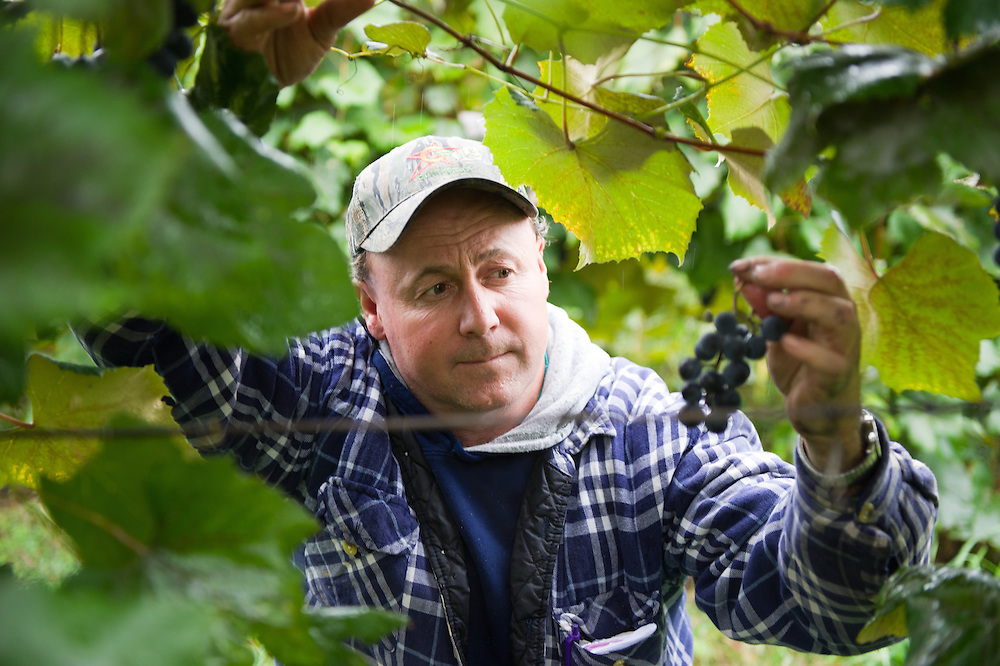 Tim Burch,  grape and fruit grower<br /> Erie County PA