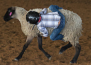 Arkansas Democrat-Gazette/BENJAMIN KRAIN --11/22/2014--<br /> Alex Watkins clings to a sheep while competing in the Mutton Busting event of the Southern Junior Rodeo held at the Saline County Fairground. The rodeo continues Sunday and features over 35 classes of riding and roping events for kids ages 19 and under.
