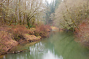 The Yaquina River flows past mossy trees and winter vegetation near the town of Chitwood, Oregon. The Yaquina River winds from the Coast Range mountains near Corvallis, Oregon to the Pacific Ocean near Newport.