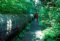 WA: Washington State; Olympic National Park, Sitka Spruce  .Photo Copyright: Lee Foster, lee@fostertravel.com, www.fostertravel.com, (510) 549-2202.Image: waolym216