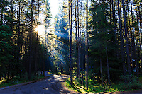 God rays through the trees at Waterfowl Lakes Campground<br /> <br /> ©2015, Sean Phillips<br /> http://www.RiverwoodPhotography.com