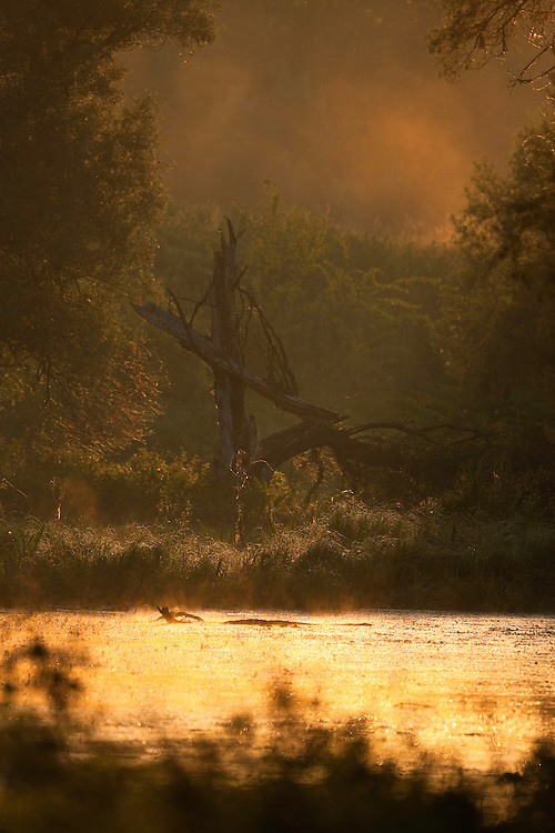 Swamp at dawn and dyke, Gornje Podunavlje Special Nature Reserve, Serbia